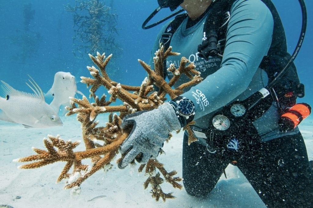 Avec la Staghorn Restoration Limited Edition, une montre de plongée technique, Oris aide à la reconstruction des récifs coraliens.
