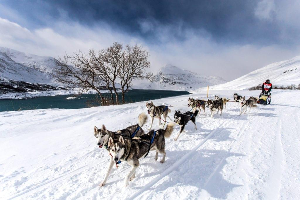 La Grande Odyssée Savoie Mont Blanc. Photo Vincent Piccerelle