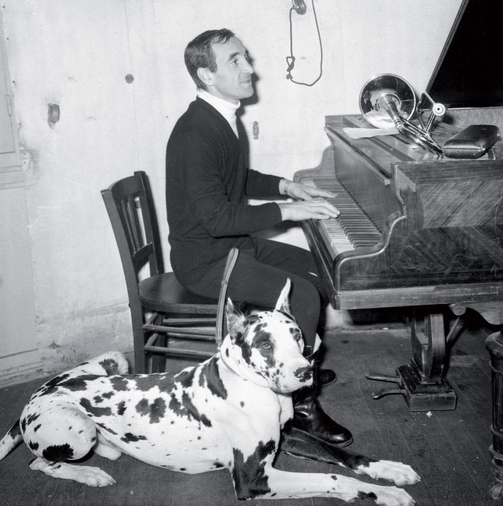 Charles Aznavour était un amoureux des chiens. Plusieurs ont partagé sa vie. Ici, en 1964, en répétition au piano à l'Olympia à Paris avec son dogue allemand « Mardi ». ©Rue des Archives