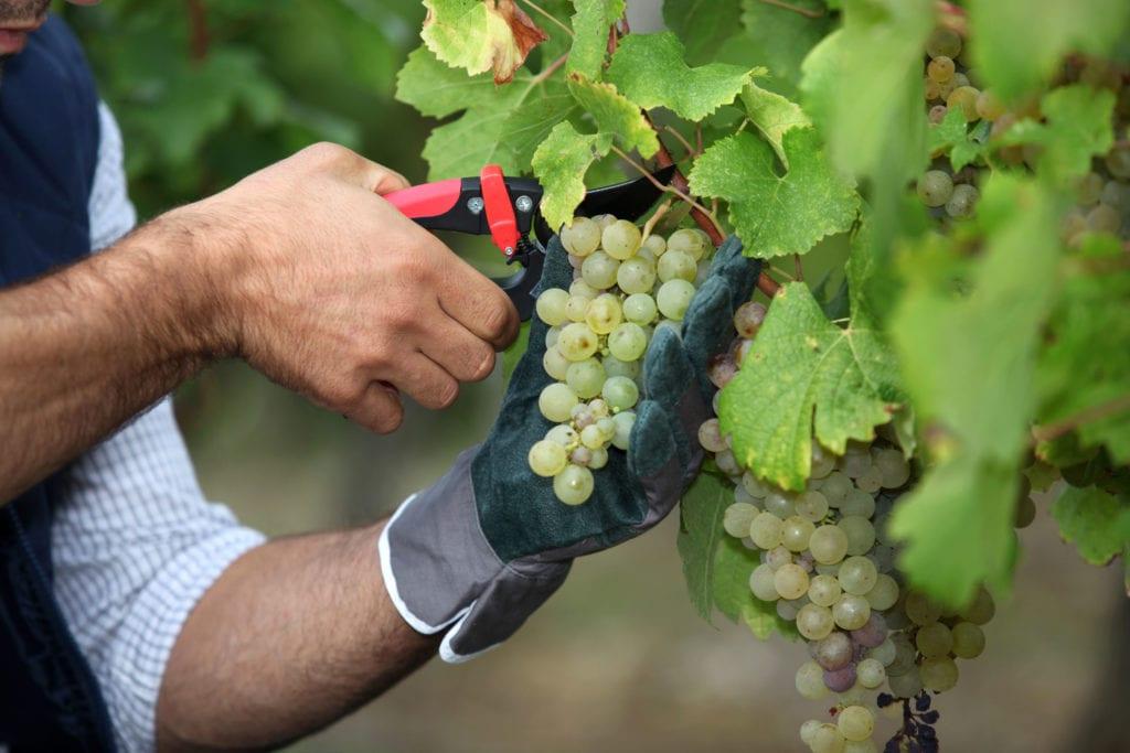 À la différence du label bio, l'HVE 3 cible uniquement l'exploitation viticole et non le vin en tant que tel. Il implique que cette dernière favorise la biodiversité et une culture à faible dépendance aux engrais. ©Adobe Stock
