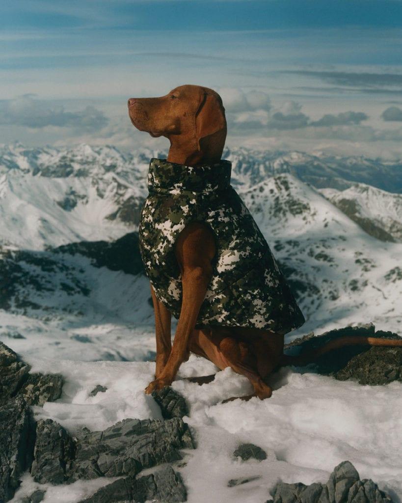 Doudoune Moncler Poldo Dog.