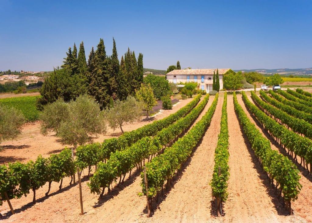 Le vignoble XXL du Languedoc Roussillon a produit en 2018 2,5 millions d'hectolitres de vins rosés, soit 25 % de plus qu'il y a 2 ans. (©Kertesz-Shutterstock)